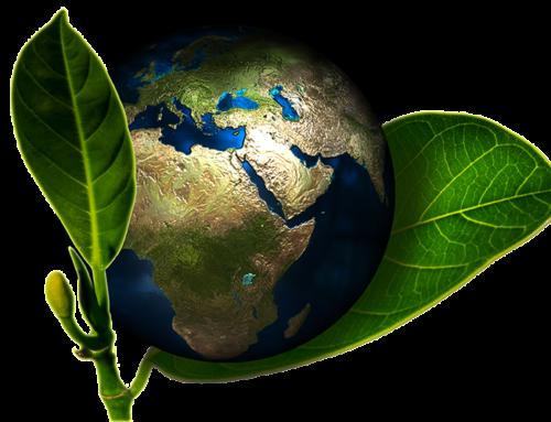 Goldjobit la dieta mediterranea e la sostenibilità ambientale